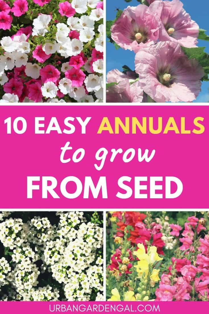 Easy annuals to grow from seed
