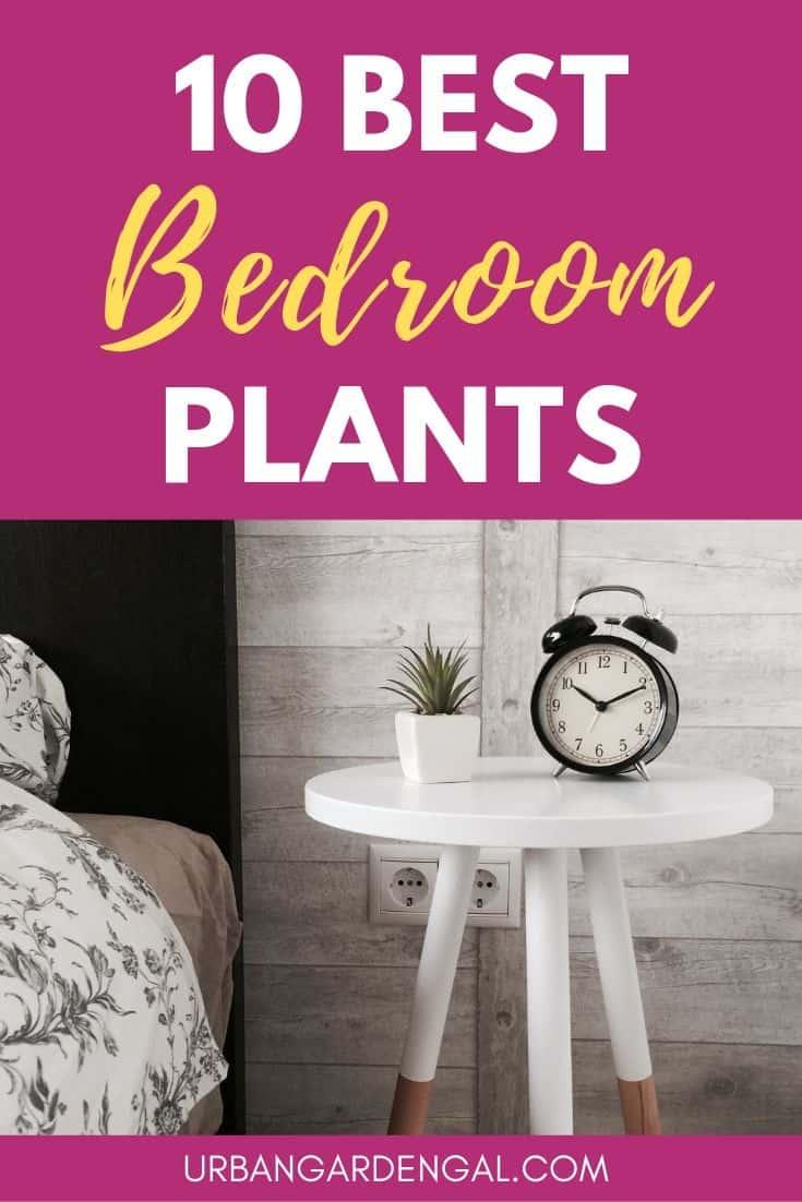Best bedroom plants