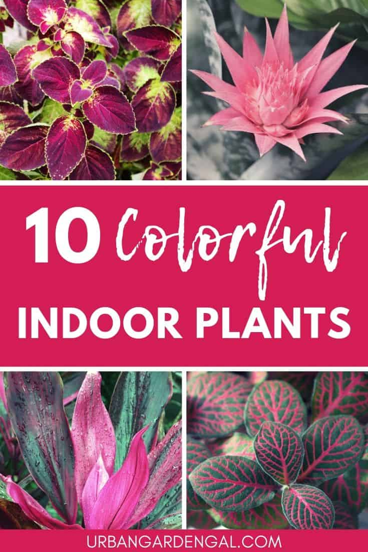 10 Colorful Indoor Plants