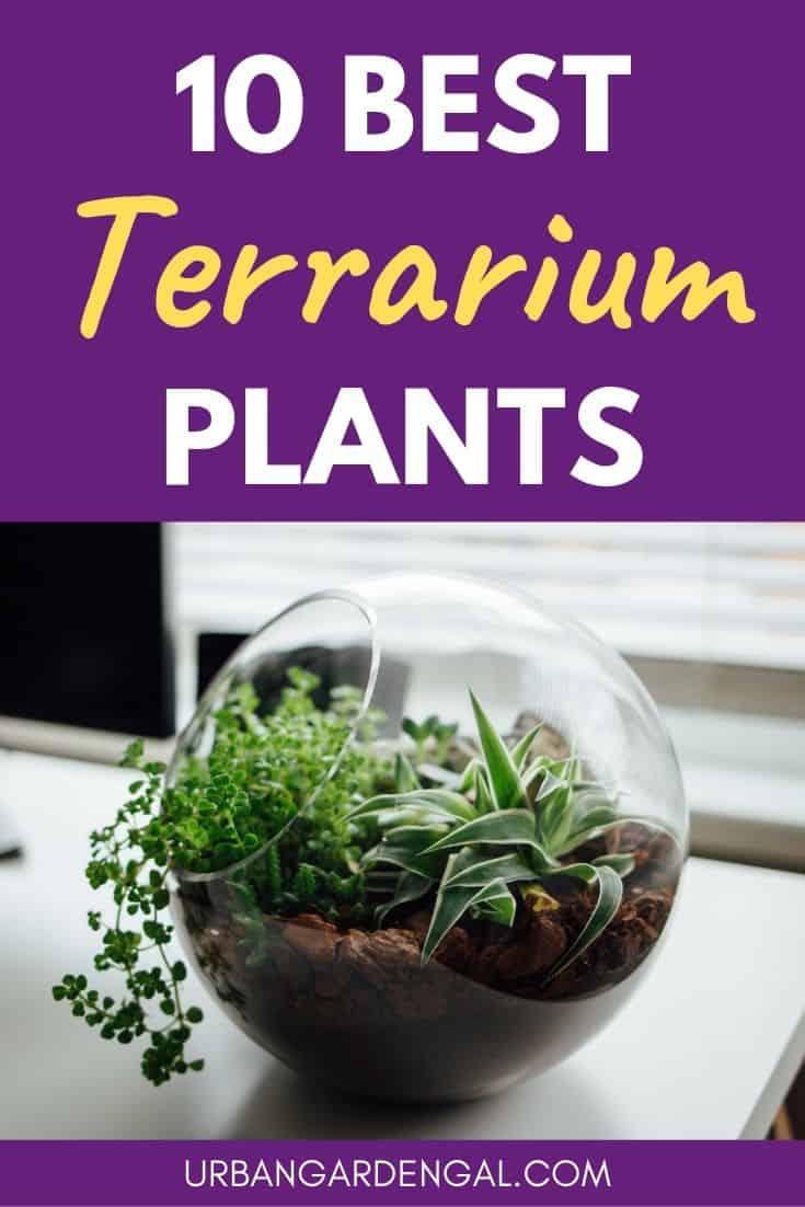 Best terrarium plants