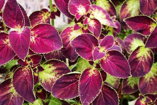 10 Colorful Houseplants