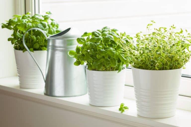 9 Best Herbs to Grow Indoors