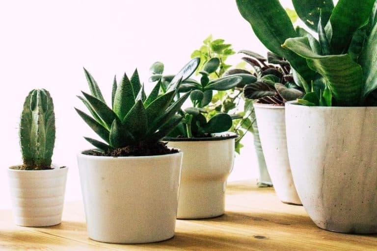 10 Easy Care Indoor Plants