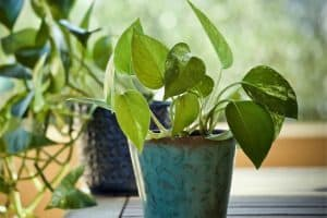 10 Easy to Propagate Houseplants