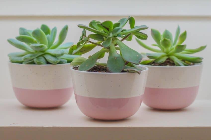 Small indoor plants in pots
