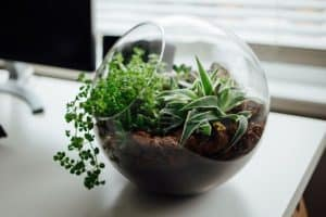 10 Best Terrarium Plants