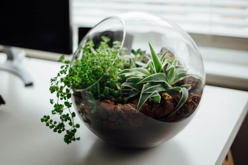 Plants in terrarium