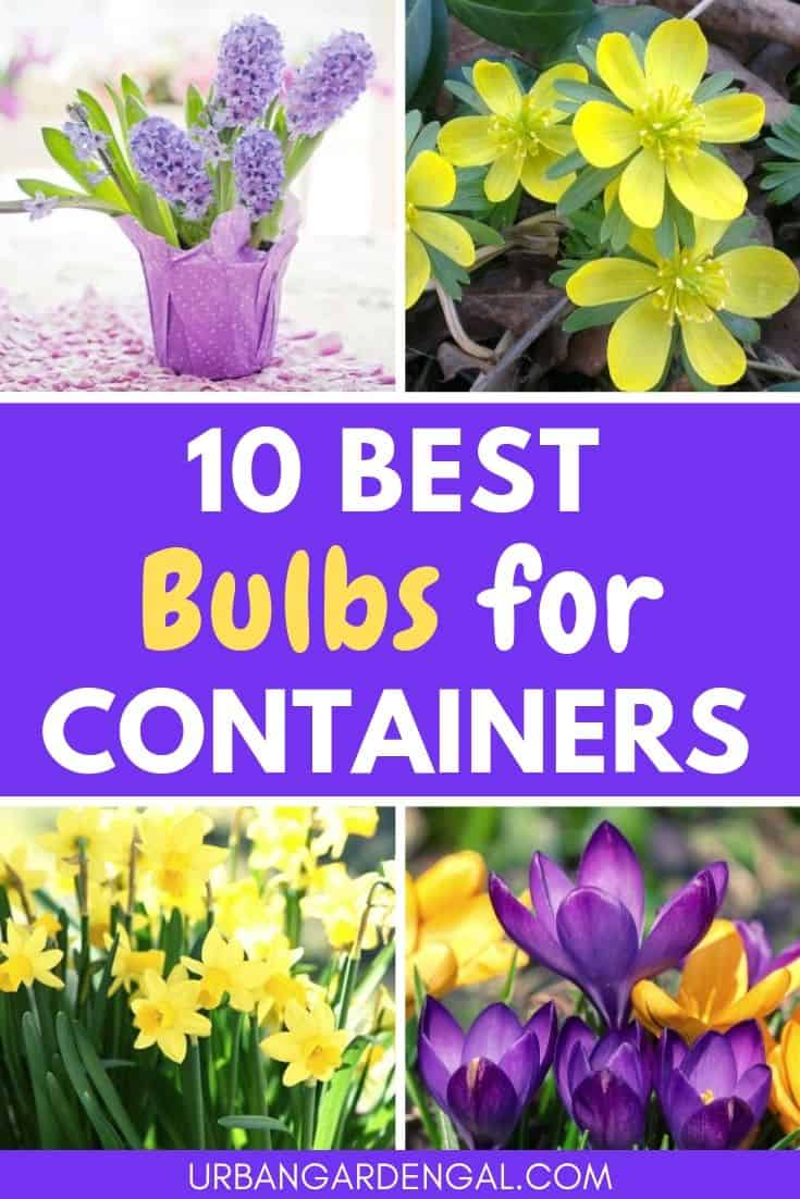 Best bulbs for containers