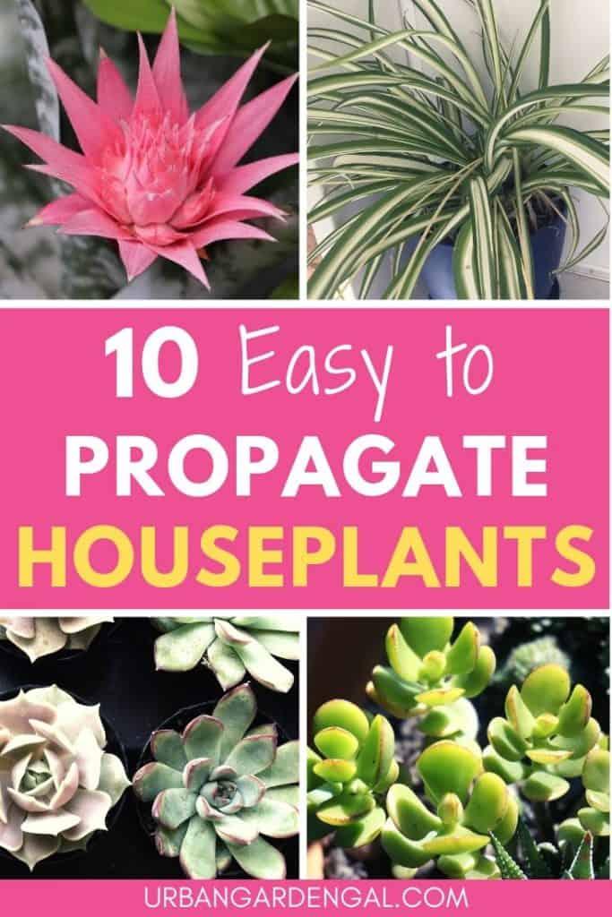 Easy to propagate indoor plants