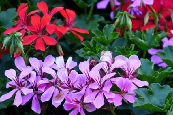 Easy to propagate plants