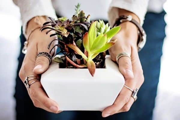 Plant for your personality type