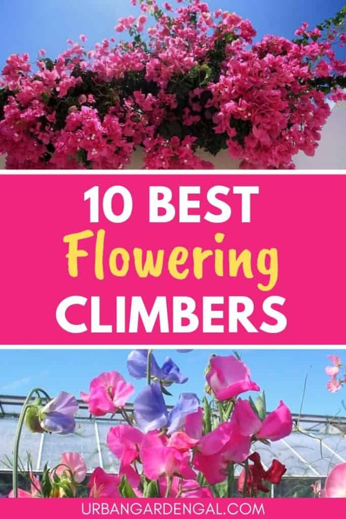 Best flowering climbers