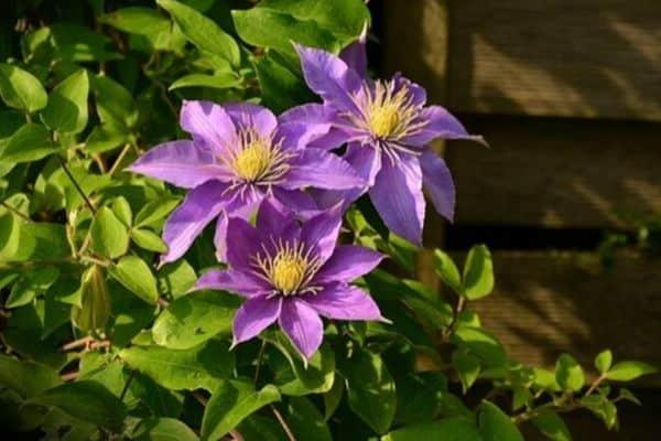 growing flowers vertically