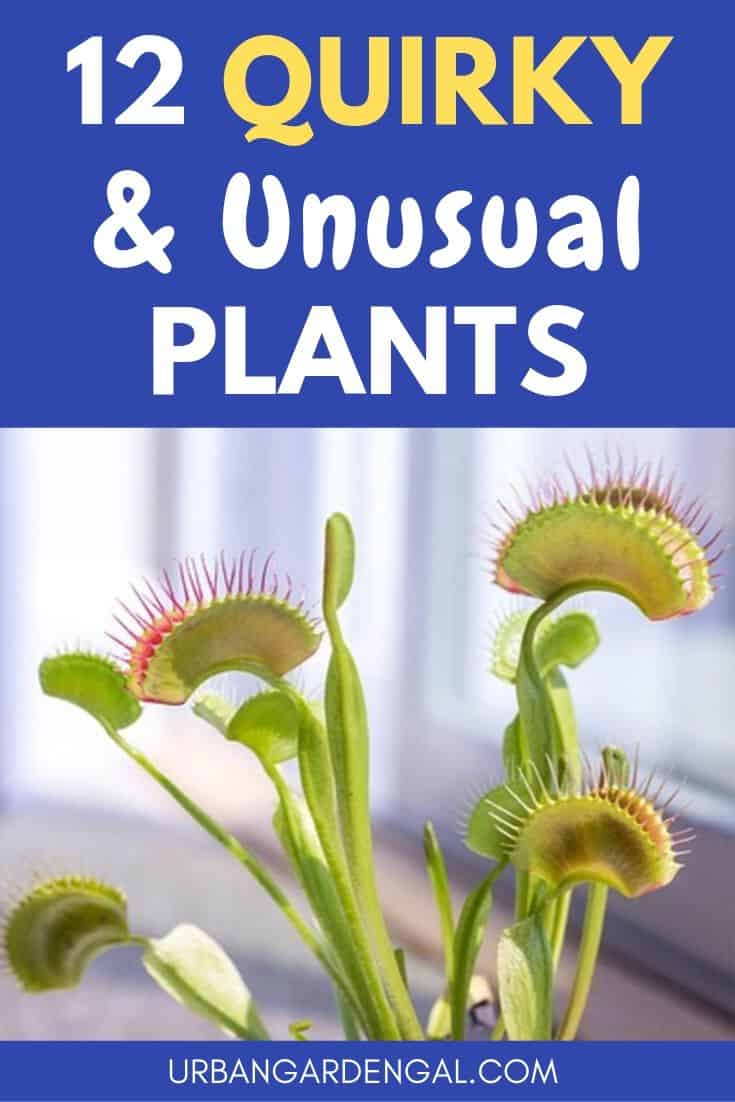Unusual and quirky plants
