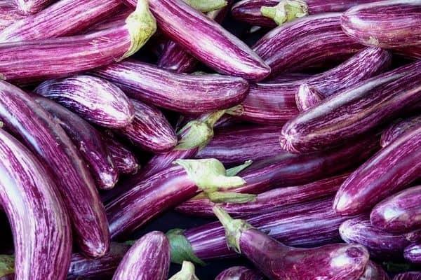 ornamental eggplant