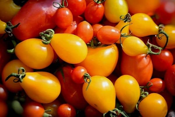 colored tomatoes