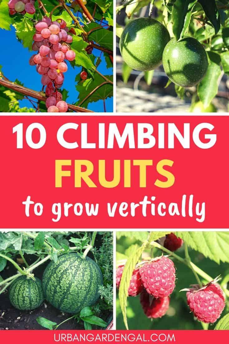 Climbing fruit plants