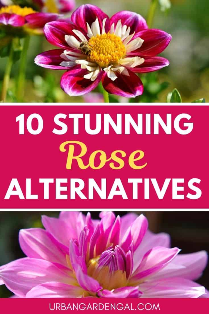 Stunning rose alternatives