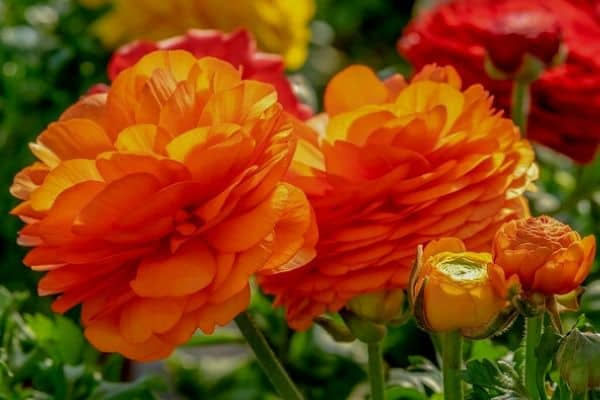 Rose alternative flowers