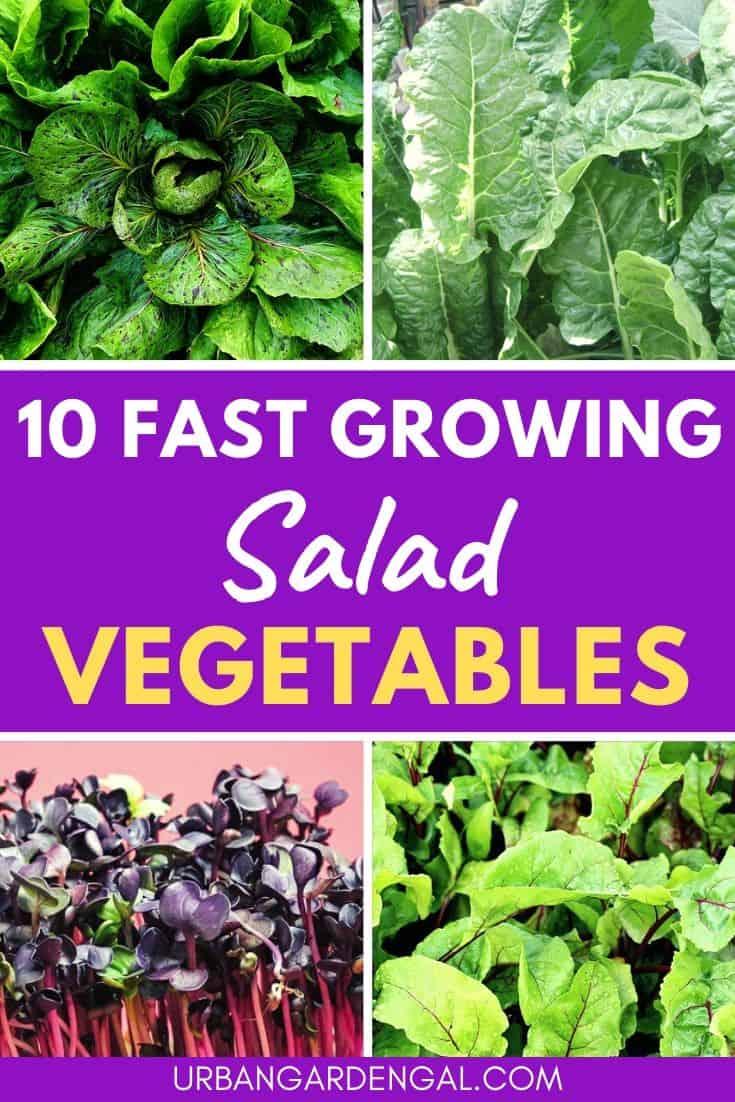 Fast growing salad greens