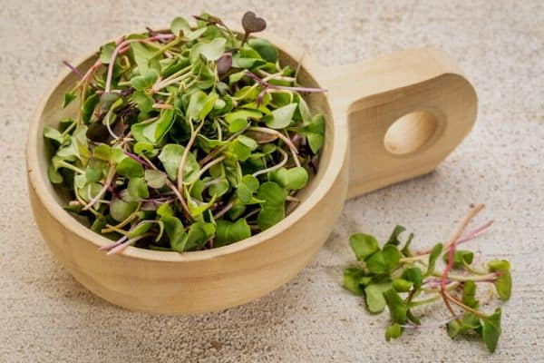 fast growing salad plants