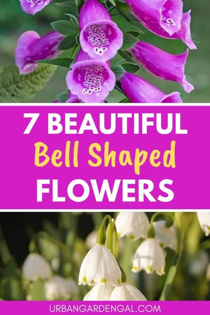 Best bell shaped flowers