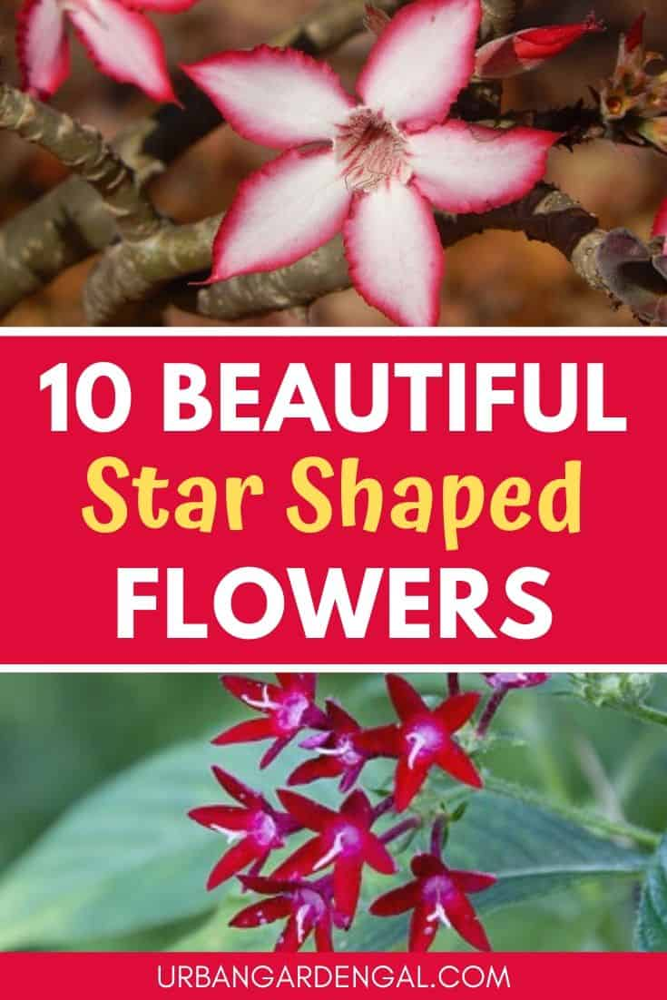 Beautiful star shaped flowers