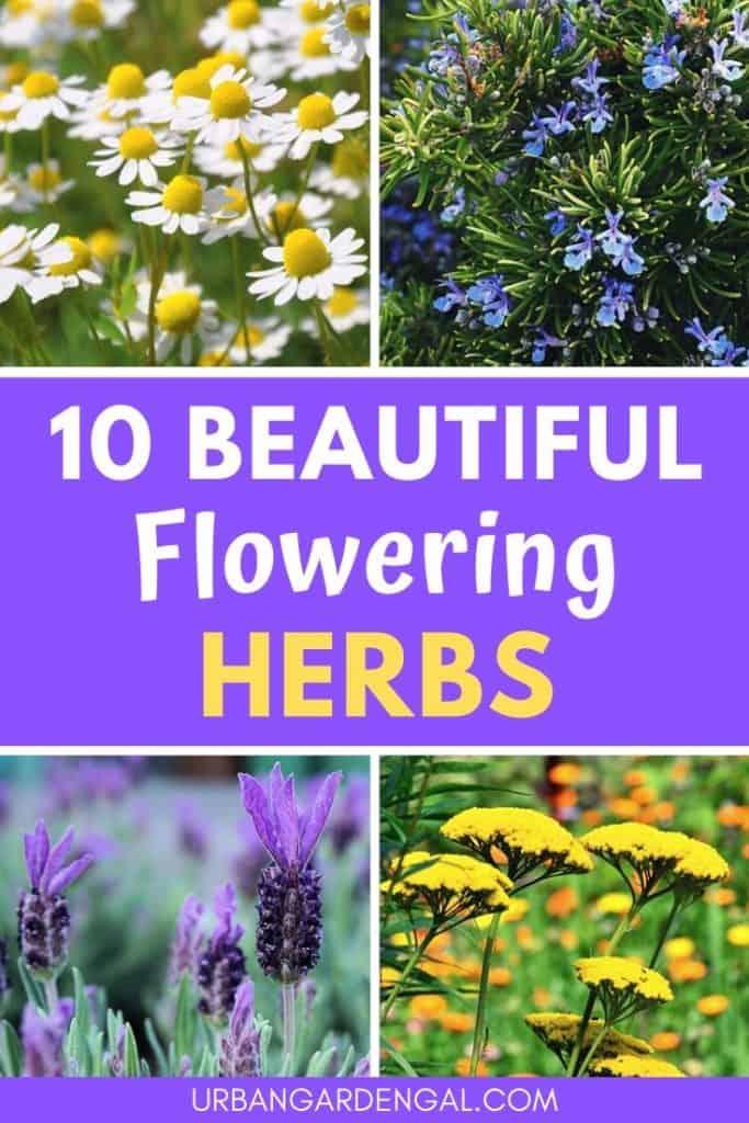 Beautiful flowering herbs
