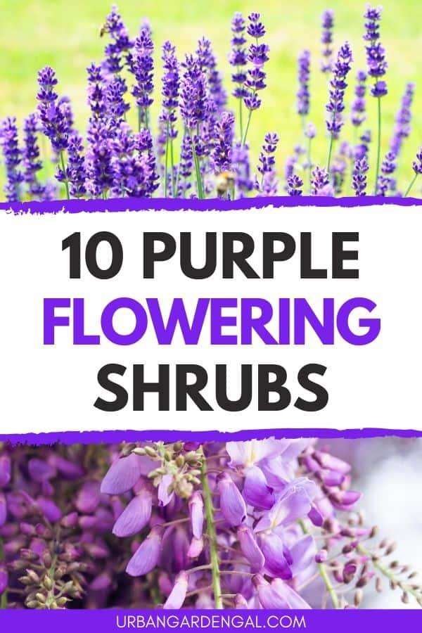 10 purple flowering shrubs