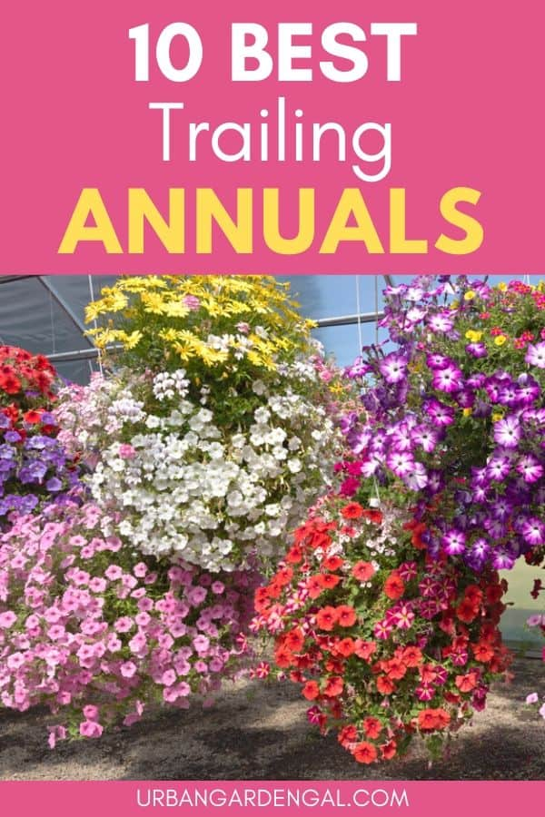 best trailing annuals