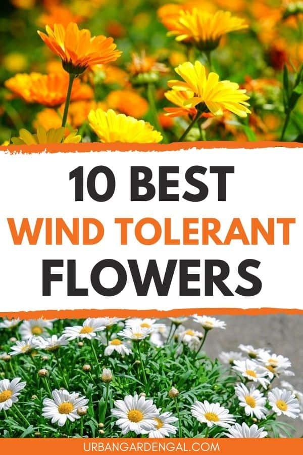 Wind tolerant flowers