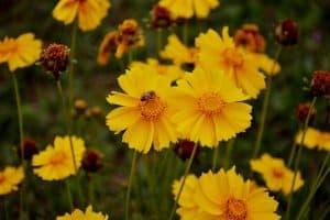 10 Best Wind Tolerant Flowers