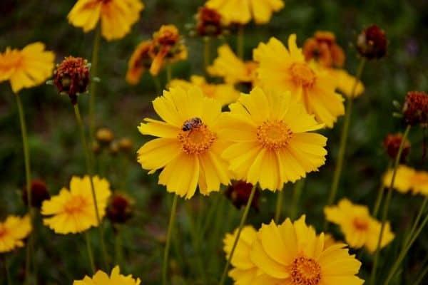 Windy flower garden