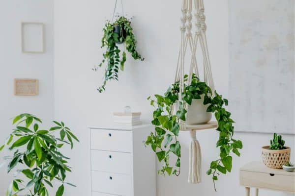 choosing the right houseplants