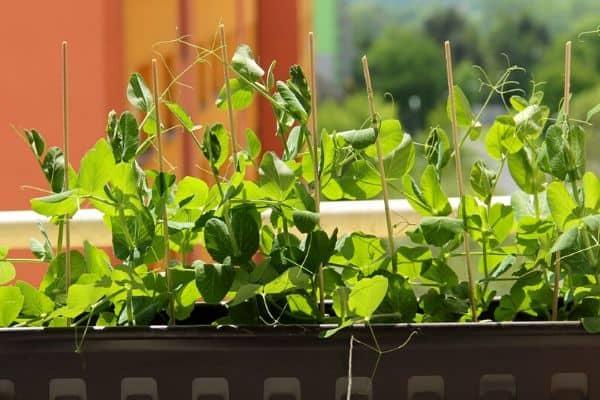 small window box garden
