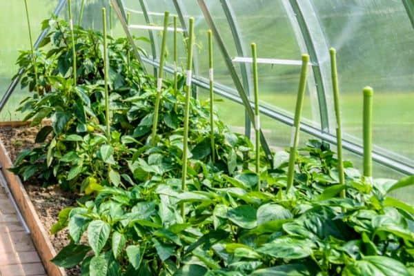 small greenhouse garden