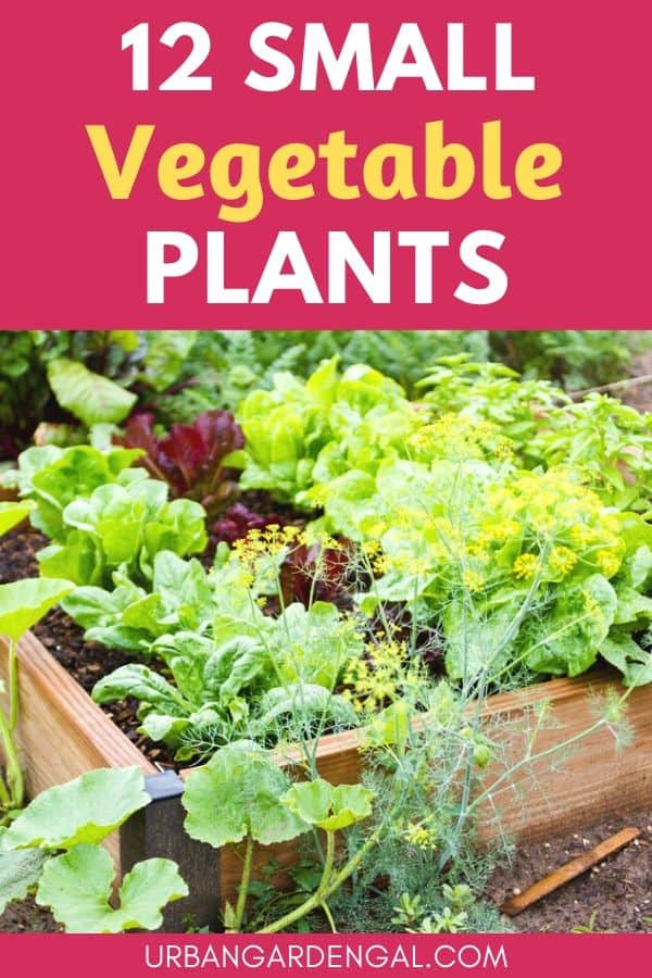 small vegetable plants