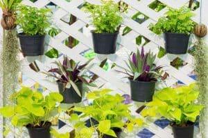 8 Vertical Fence Garden Ideas