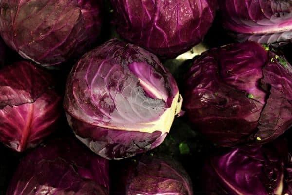 purple vegetable plants