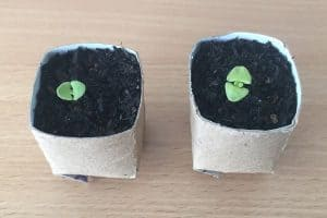 How To Make Toilet Roll Pots