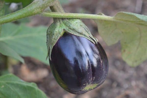 black vegetable garden