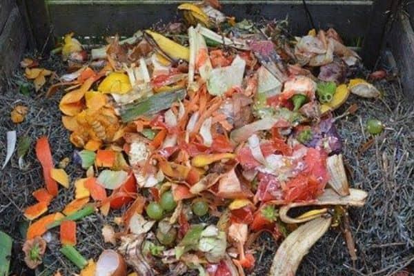 urban garden compost bin