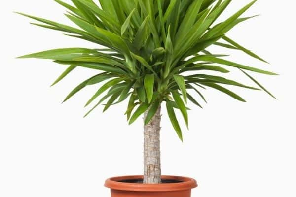 spiky houseplant