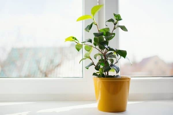Read more about the article 12 Houseplants That Can Tolerate Direct Sunlight