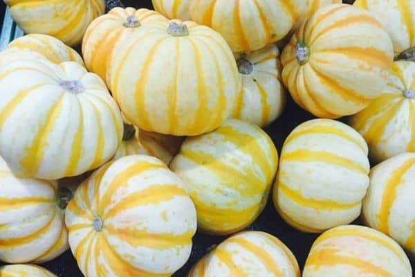 small pumpkin varieties