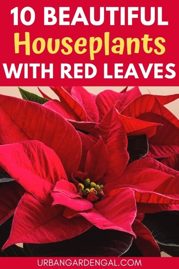red houseplants