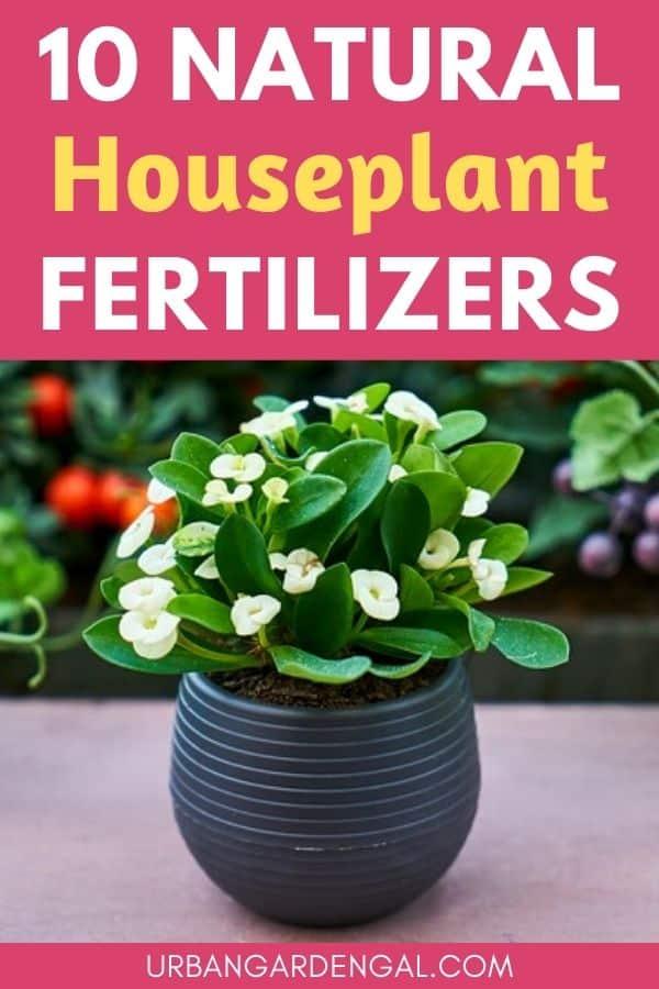 indoor plant fertilizers