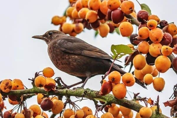 bird sitting on a fruit tree