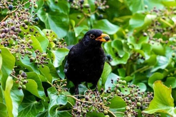 bird eating fruit tree
