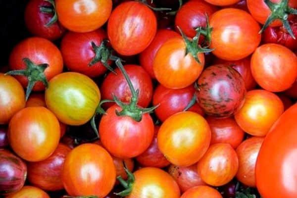 small tomato varieties